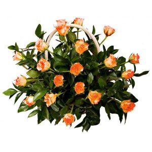 Kosz z 20 kremowo-łososiowych róż