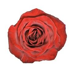 Czerwone Róże - Średnie 60-70cm