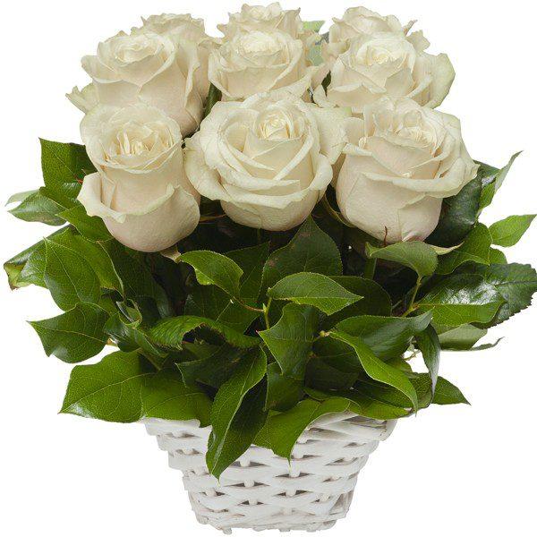 ",,Róże kremowe online"""