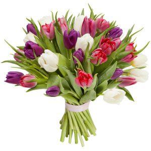 Bukiet z 35 Kolorowych tulipanów